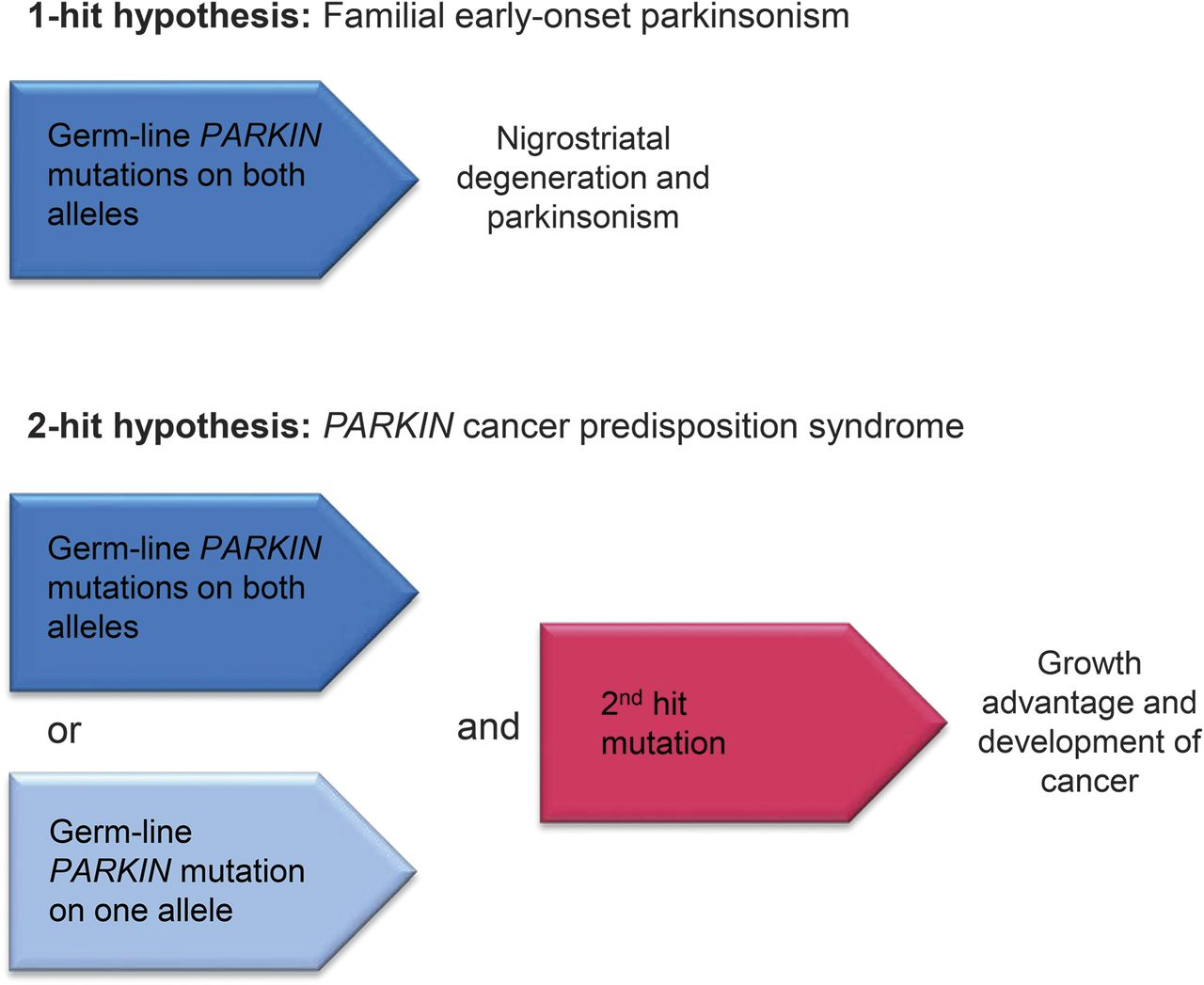 Is PARKIN Parkinsonism A Cancer Predisposition Syndrome